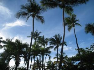 carib sky